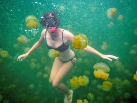MUST WATCH: Swimming With Jellyfish - Wonderful!