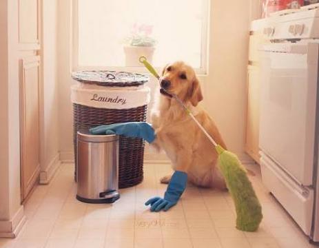 Dog As A Housekeeper - Funny Dog Tricks