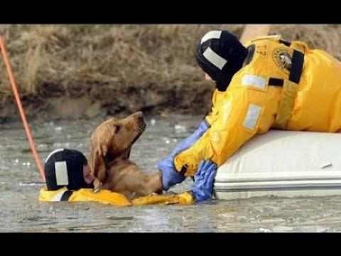 Most Inspiring Animal Rescue Compilation