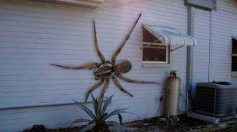 WOW!! Man Catches A Giant Spider