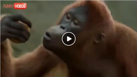 Monkey Dance - 'I like to move it'